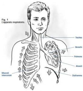 La respirazione assisla onlus - L allergia porta sonnolenza ...